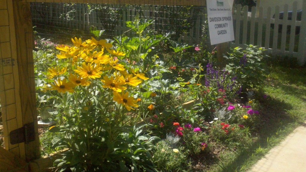 Davidson Springs Community Garden Flowers in Bloom